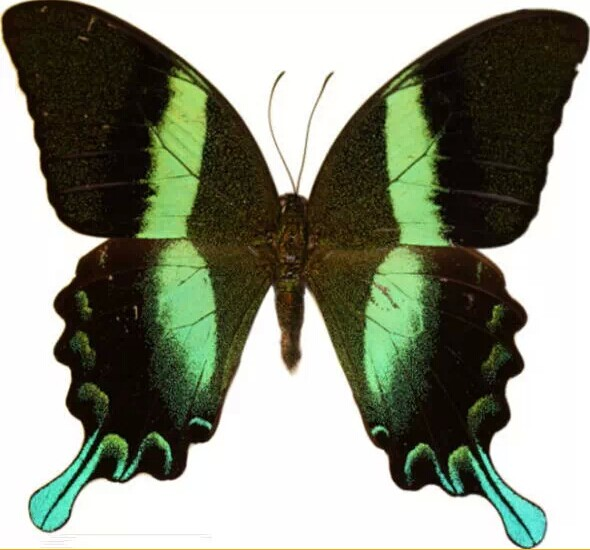 科学家研发出似蝴蝶翅膀结构的印刷加密技术